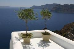 santorinitree royaltyfria foton