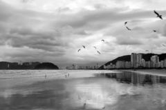 Santos beach photographed in black and white royalty free stock images