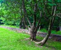 Santuário da natureza de Virgínia Foto de Stock