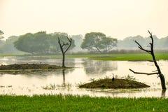Santuário de pássaro de Bharatpur, Rajasthan, Índia Fotografia de Stock