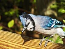 Santuário de pássaro de Ohio em Mansfield, Ohio Foto de Stock