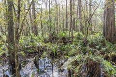 Santuário do pântano do Corkscrew Fotos de Stock Royalty Free