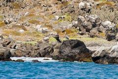 Santuario Chile de la naturaleza y de fauna fotos de archivo libres de regalías