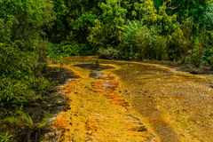Santuario de fauna de Khram de la explosión de Khao Pra, manera a Sa Morakot, destino turístico de Emerald Pool aka Bosque tropic fotografía de archivo libre de regalías