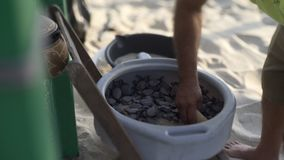 Santuario de la tortuga almacen de metraje de vídeo