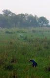 Santuario de pájaro de Sultanpur (9/9) fotos de archivo