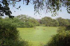 Santuario de pájaros de Bharatpur, la India Fotografía de archivo libre de regalías