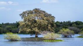 Santuario de Thabbowa, Puttalam, Sri Lanka imagenes de archivo