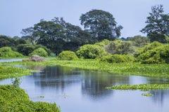 Santuario de Thabbowa, Puttalam, Sri Lanka fotografía de archivo