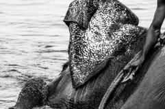 Santuario del elefante de Kodanad - baño del elefante en curso foto de archivo libre de regalías
