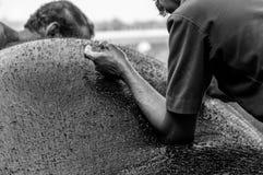 Santuario del elefante de Kodanad - baño del elefante en curso con los encargados que se lavan comprobando su piel - blanco y neg imagen de archivo