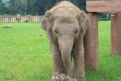 Santuario dell'elefante Fotografia Stock