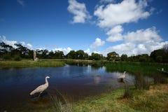 Santuario di fauna selvatica a Melbourne fotografie stock libere da diritti