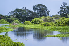 Santuario di Thabbowa, Puttalam, Sri Lanka fotografia stock