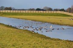 Santuario di uccello Fotografie Stock
