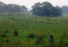 Santuario di uccello di Sultanpur (7/9) Fotografia Stock Libera da Diritti