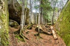 Santuario russo della natura di Stolby della riserva Vicino a Krasnojarsk fotografia stock libera da diritti