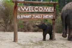 Santuario Tailandia Chang Mai della giungla dell'elefante fotografie stock