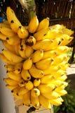 Sao delicioso Paulo Brazil de la vitamina de la comida de la fruta de la agricultura del árbol del manojo del plátano imágenes de archivo libres de regalías