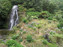 Sao Miguel, Azores Royalty Free Stock Image