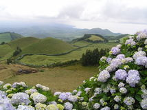 Sao Miguel, Azores Stock Images