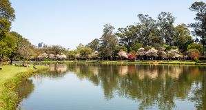sao paulo парка ibirapuera Стоковая Фотография