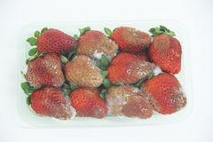 Sao Paulo Brazil för frukt för form för jordgubbemat åkerbruk isolerad läcker healthful royaltyfria foton