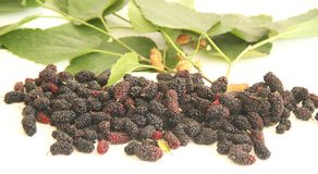 Sao Paulo Brazil för vitamin Blackberry frukt isolerad för vit bakgrundsmat läcker fotografering för bildbyråer