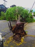 Sao Paulo city, Sao Paulo state/New Avenue Independencia, 1066, Brazil South America. 10/13/2018 Rain with strong wind knocks tree. On New Avenue Independencia royalty free stock photography