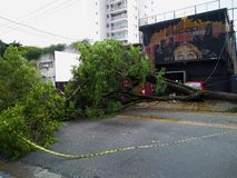 Sao Paulo city, Sao Paulo state/New Avenue Independencia, 1066, Brazil South America. 10/13/2018 Rain with strong wind knocks tree. On New Avenue Independencia stock images