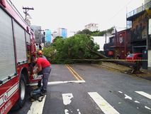 Sao Paulo city, Sao Paulo state/New Avenue Independencia, 1066, Brazil South America. 10/13/2018 Rain with strong wind knocks tree. On New Avenue Independencia stock photography