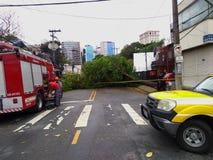 Sao Paulo city, Sao Paulo state/New Avenue Independencia, 1066, Brazil South America. 10/13/2018 Rain with strong wind knocks tree. On New Avenue Independencia stock image