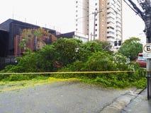 Sao Paulo city, Sao Paulo state/New Avenue Independencia, 1066, Brazil South America. 10/13/2018 Rain with strong wind knocks tree. On New Avenue Independencia royalty free stock photo