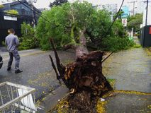 Sao Paulo city, Sao Paulo state/New Avenue Independencia, 1066, Brazil South America. 10/13/2018 Rain with strong wind knocks tree. On New Avenue Independencia royalty free stock images
