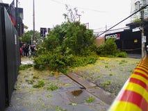 Sao Paulo city, Sao Paulo state/New Avenue Independencia, 1066, Brazil South America. 10/13/2018 Rain with strong wind knocks tree. On New Avenue Independencia stock photos