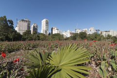 Sao Paulo cityscape from the park - Vila Olimpia Royalty Free Stock Image