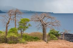 Sao Tome and Principe imagens de stock royalty free
