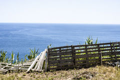 SaoMiguel ö, Azores, Portugal royaltyfri bild