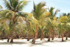 Saona海岛,加勒比海滩 库存照片