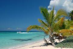 Saona,海岛在多米尼加共和国是海岛 免版税图库摄影