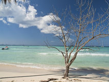 Saona Royalty Free Stock Photography