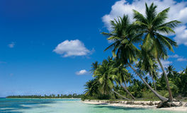 Saona island. Beach on Saona island royalty free stock photography