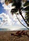 Saona island beach Stock Images