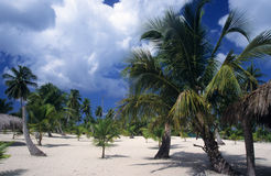 Saona island landscape - Dominican republic Stock Images