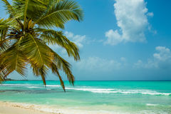 Saona Island - paradise on Earth stock photo