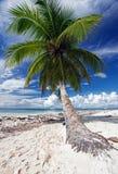 Saona plaża Fotografia Royalty Free