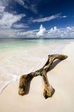 Saona plaża Zdjęcie Royalty Free