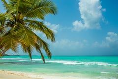 Saona wyspa - raj na ziemi Zdjęcie Stock