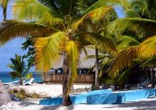 Saona wyspy plaża, republika dominikańska zdjęcia stock
