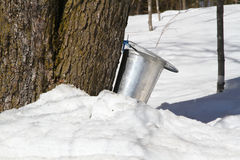 Sap bucket attached to tree Stock Photos
